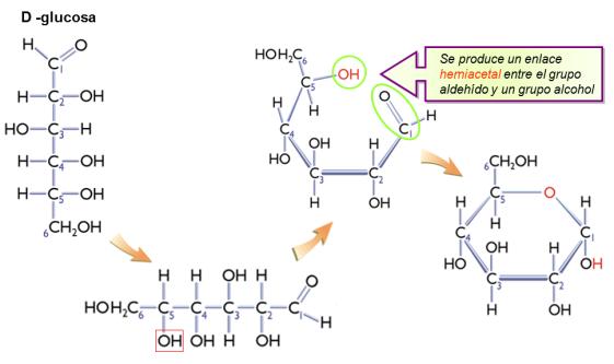ciclacion-glucosa-aldosas