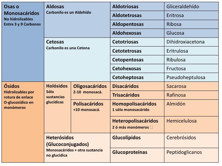 Clasificacion-glucidos