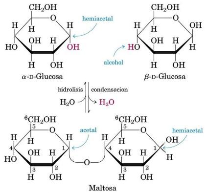 condensacion-hidrolisis-disacarido