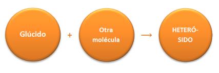 heterosido