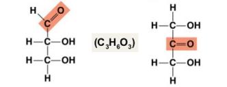 Isomeria-funcion-monosacaridos