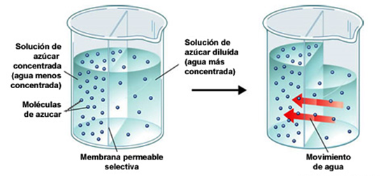 sales minerales funciones
