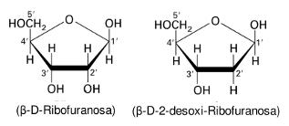 Monosacáridos Lidia Con La Química