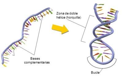 ARN-02-bucles-horquillas