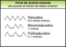 lipidos-03-acidos-grasos-clasificacion