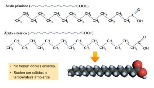 lipidos-04-acido-palmitico-estearico