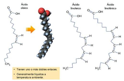 lipidos-05-acidos-grasos-insaturados