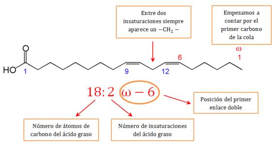 lipidos-08-nombre-acidos-grasos-omega-3-6
