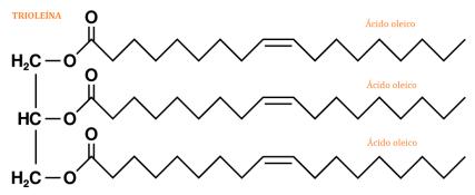 lipidos-13-triglicerido-simple-trioleina