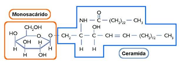 Lípidos Saponificables Lidia Con La Química