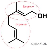 lipidos-28-geraniol