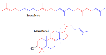 lipidos-32-triterpenos