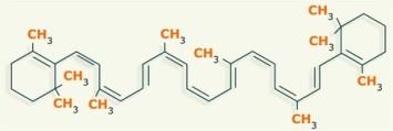 lipidos-33-caroteno