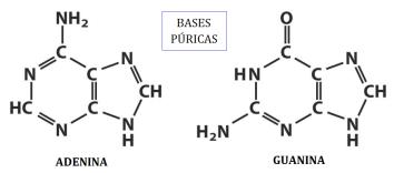 nucleotidos-03-adenina-guanina
