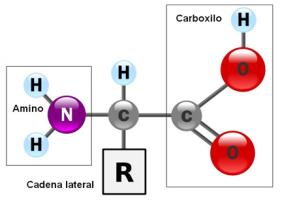 proteinas-02-aminoacido-general