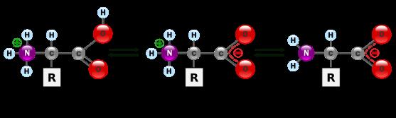 proteinas-03-zwitteron