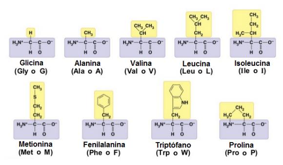 proteinas-05-aminoacidos-apolares