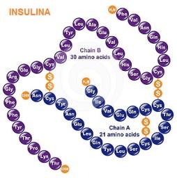 proteinas-13-insulina