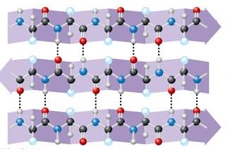 Niveles De Organización De Las Proteínas Lidia Con La Química