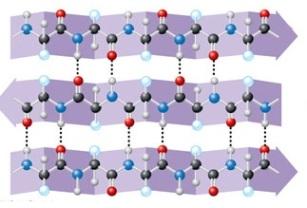 proteinas-15-estructura-secundaria-2