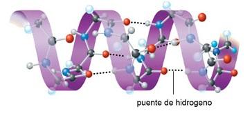 proteinas-15-estructura-secundaria