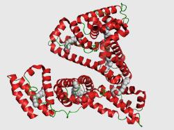 proteinas-26-seroalbumina