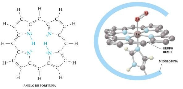 proteinas-29-grupo-hemo