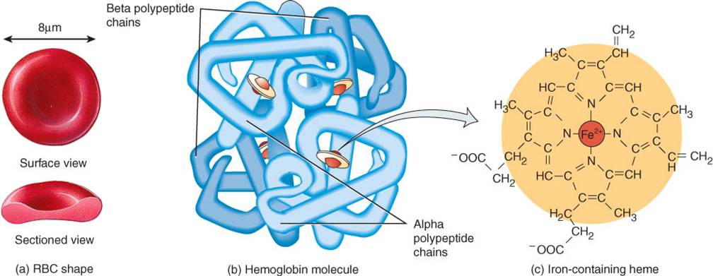 Hemoglobina Lidia Con La Química