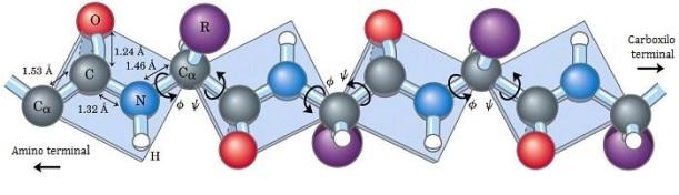 proteinas-plano-enlace-peptidico