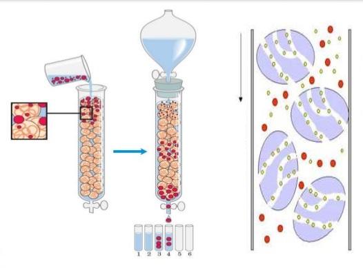 cromatografia-columna-laboratorio