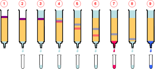 cromatografia-columna