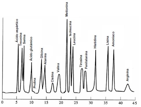 Separacion-aminoacidos-cromatografia-ionica