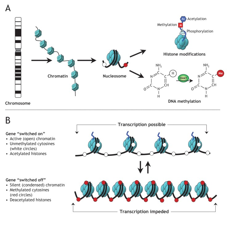 EpigeneticModifications