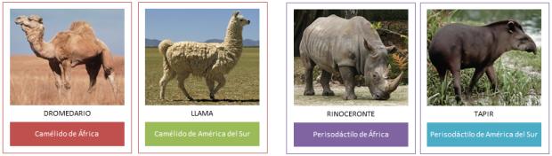 pruebas-biogeograficas