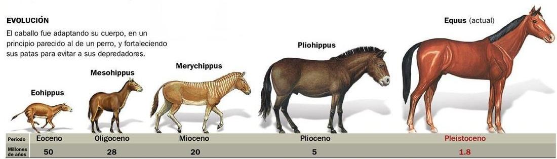 Resultado de imagen para Evolución de los Seres Vivos