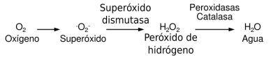 superóxido-dismutasa